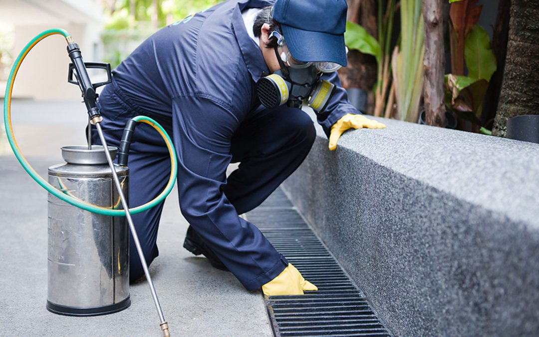 TEN PEST CONTROL TIPS TO KEEP THE PESTS AWAY THIS SUMMER